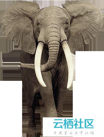 PS创意合成砂质化的大象-大象的英文创意字母